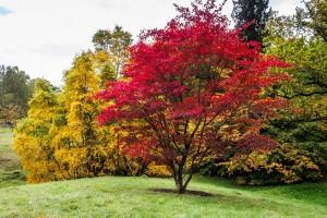 Best Outdoor Trees in Georgia